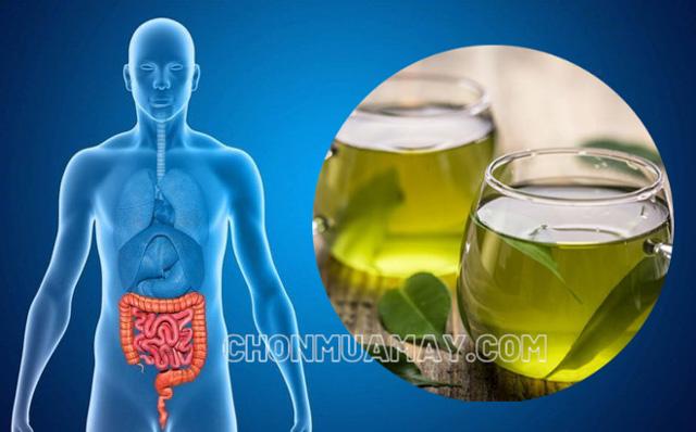 Uống nước lá vối có tác dụng gì